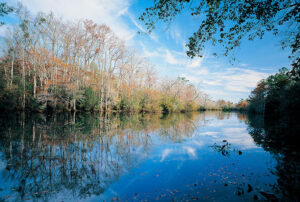 Tensaw River Delta